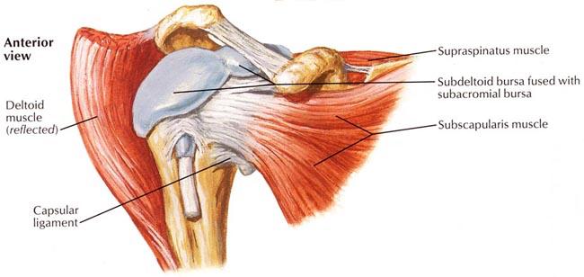 Shoulder Arthroscopy Reston Shoulder Joint Surgery Ashburn Fairfax